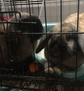 Декоративные кролики!