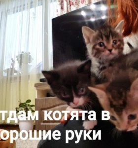 Отдам котята в хорошие руки, к лотку Приучины