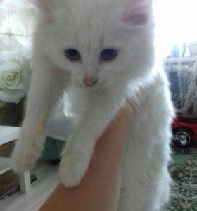 СРОЧНО!котёнок!