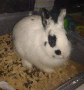 Декоративный кролик (с клеткой)
