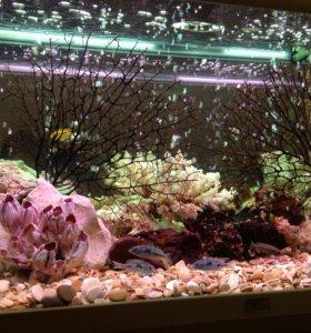 обслуживание и чистка аквариумов