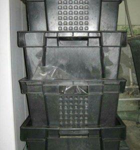 Готовый ящик с коконами дендробенны