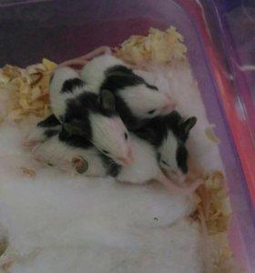 Мышки японские