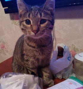 Кошки мышеловки в ваш дом.