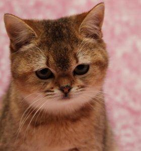 замурчательная кошка