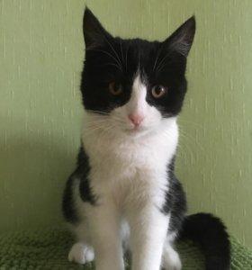 Котенок 3,5 месяца