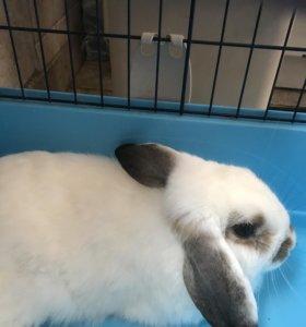 Кролик Чарли