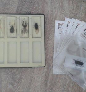 Коллекционные насекомые