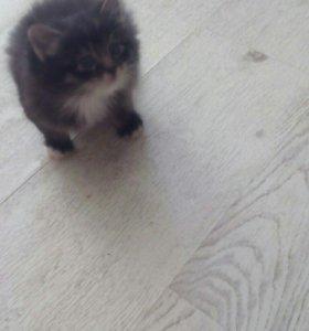 Чудный пушистый котенок