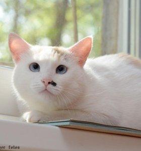 Кошка Мальта
