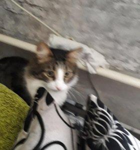 Кот .