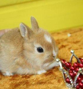 Кролик привит доставка