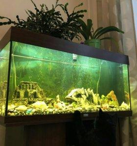 Аквариум 180л с рыбками и тумба (+доставка)