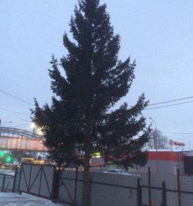 Ель новогодняя 10 метров