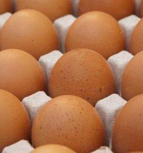 Яйца куриные(деревенские)
