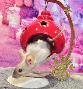 Мыши сатины блестящие