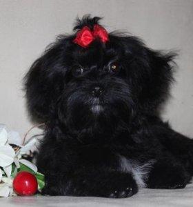 Великолепный черный мини мальчик