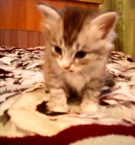 Отдам котят в добрые руки. 3 кошечки и 2 котика