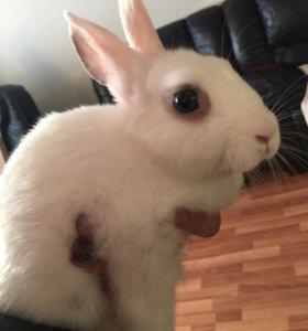 Отдам кролика в добрые руки