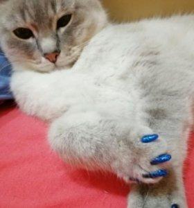 Антицарапки силиконовые для кошек