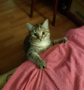 Отдаем котенка в добрые руки
