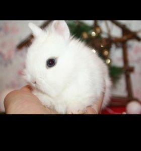 Кролик доставка