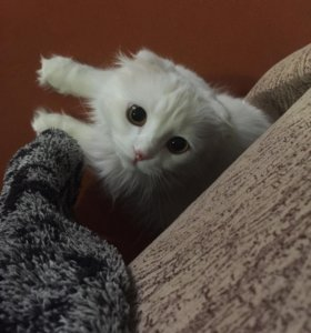Кошка. ВЯЗКА.