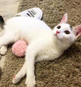 Котенок - сахарная ватка