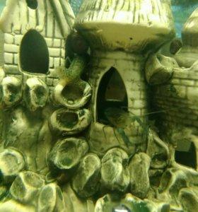 Рак карликовый (для аквариума)