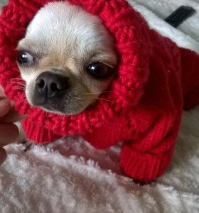 вязанная одежда для собаки