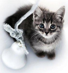 котенок Тимофей