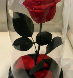 Роза в колбе-27 см