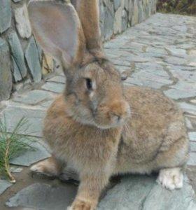 Крол для вязки