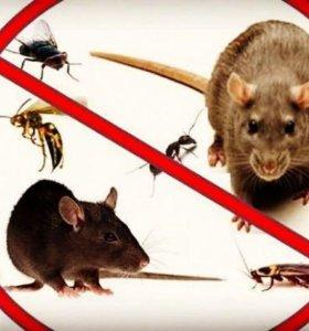 Уничтожение клопов, тараканов, мышей