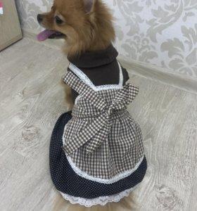 Платье для маленьких пород собак размер м