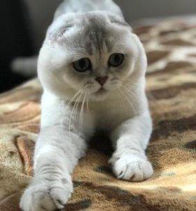 котята; коты на вязку