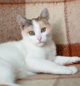 Ищет свою семью и дом котенок Изюминка.
