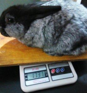 Крольчата 2 месяца