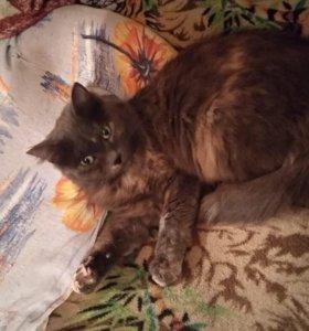 Кошка 2 года Мейси