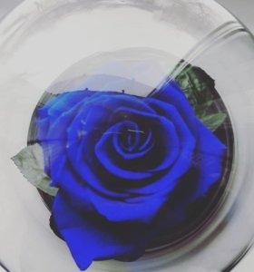 Роза в колбе🌹