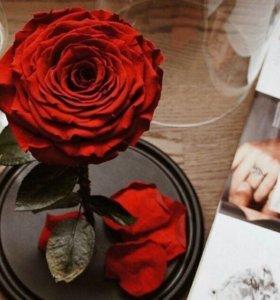 Роза в колбе «Бонита»