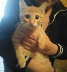 Рыжий котёнок в добрый руки! Счастье и богатство в