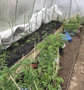 Заказ на рассаду помидоры перцы баклажаны
