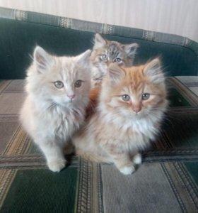 Очень красивые и милые котята-девочки