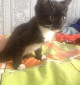 Кошка(котенок)