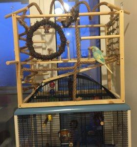 Игровой стенд для птиц