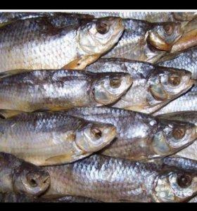 Рыба, вобла