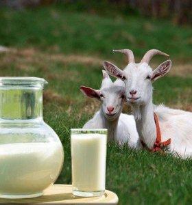 Козье молоко, сыр