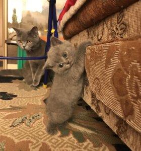 Котята, девочки