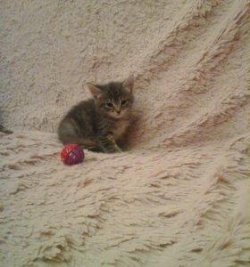 Котёнок от домашней кошки в добрые руки!